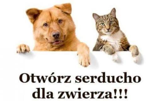 Zbiórka karmy dla zwierząt - akcja